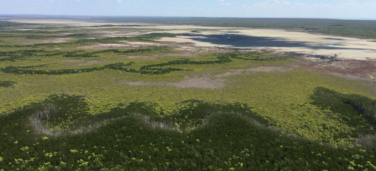 An aerial view of mangrove coverage in northern Australia.
