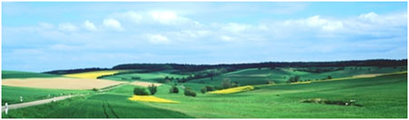 A photograph of an agricultural landscape.