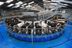Rotary milking parlour at IBERS
