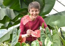 Dr Julie Hofer with Anthurium andraenum one of the fascinating plants in the Botany Garden at Aberystwyth University.