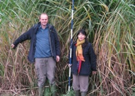Miscanthus hybrids such as these growing in Aberystwyth, Wales UK are expected to play an increasing role in providing renewable energy. Dr John Clifton-Brown (L) and Dr Lin Huang, have collected wild Miscanthus in South Korea to increase biomass yield and quality for use in UK, EU and US.