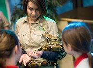 Science is fun: pupils come face to face with a snake during at the 2014 Science Festival