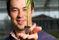 Michal Mos, Head of Science & Technology at Terravesta with a miscanthus plug developed from seed, ready for planting.