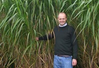 Dr John Clifton-Brown standing next to some Miscanthus plants (Asian elephant grass)