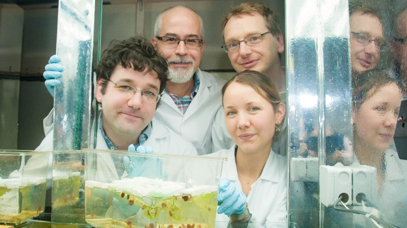 Left to Right: Members of the Barrett Centre for Helminth Control at Aberystwyth University; Dr Iain Chalmers, Professor Karl Hoffmann, Dr Martin Swain and Dr Kathy Geyer