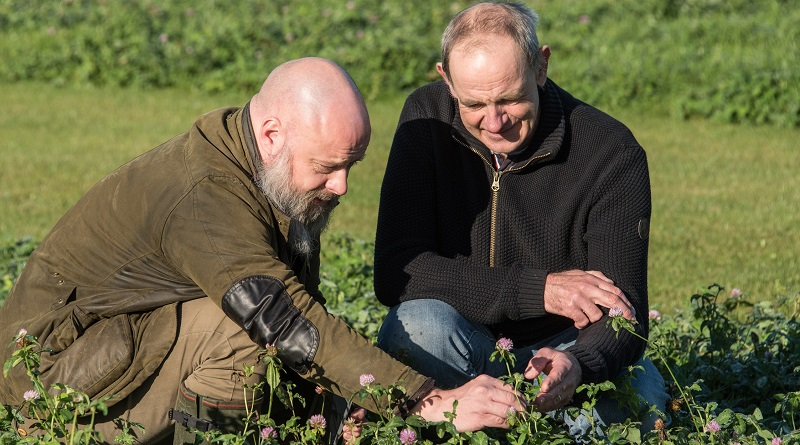 IBERS scientists Dr Leif Skøt (right) and Dr David Lloyd, studying red clover, one of the protein sources to be studied as part of the European and Chinese legumes EU funded project EUCLEG. Not pictured are the other team members, Dr Rosemary Collins and Mr Huw Powell.